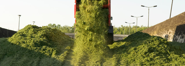 The best silage quality